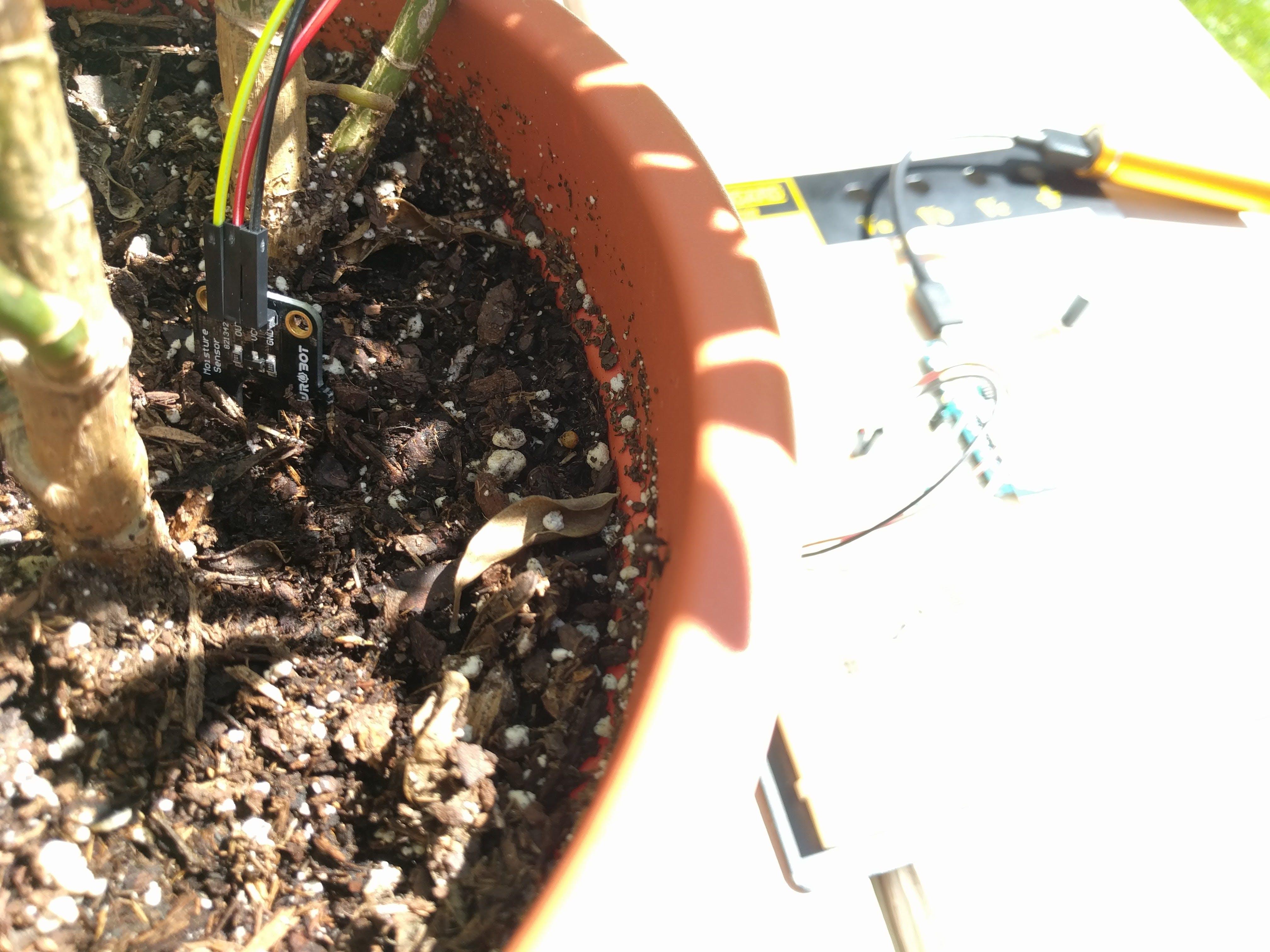 Moisture sensor in soil.