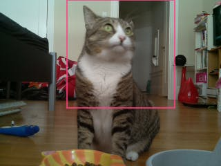 This is an actual photo taken by my Raspberry Pi, while Jamie was eating, and detected by KittyDar cat facial detection!