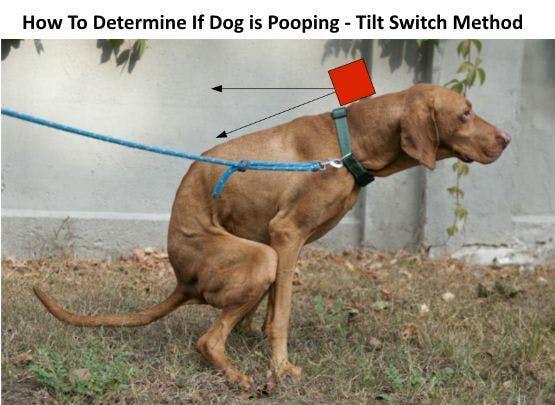 Dog Poop Detection