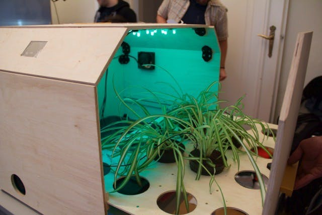 plants in