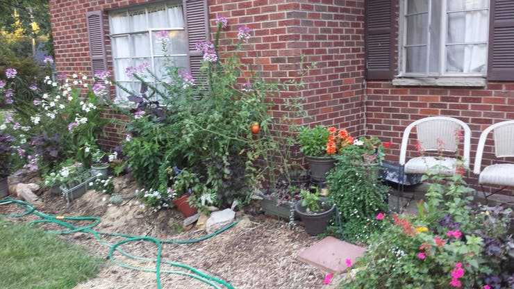 Wendy's lusciously watered garden!